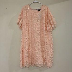 The Limited Blush Lace Plus Size Dress 20